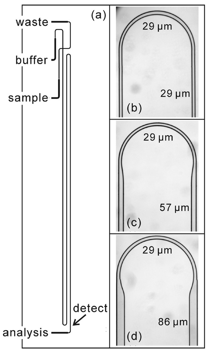 Microchip electrophoresis of N-glycans on serpentine separation channels with asymmetrically tapered turns